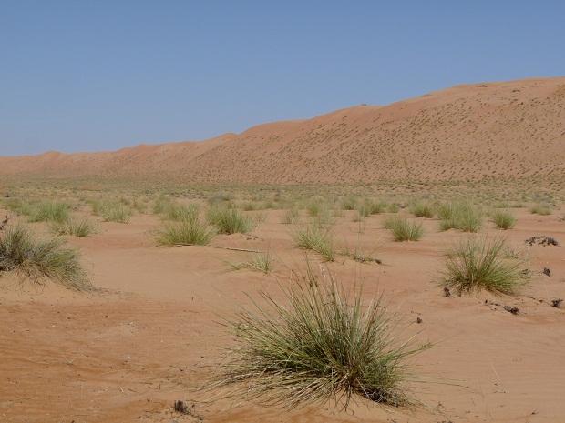 Die artenreiche Wüste