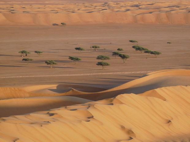 Ghaf Bäume in der omanischen Wüste