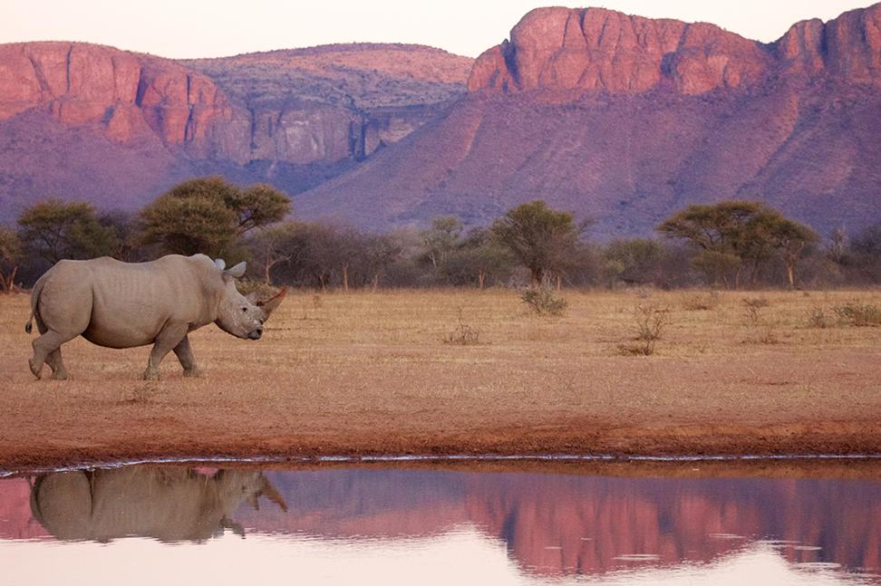 Im malariafreien Game Reserve können Sie auch Nashörner sehen