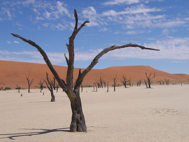 Dead Vlei - ein Highlight einer Namibia Reise mit Genuss Touren