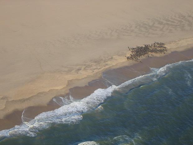 Robbenkolonie an der Küste von Namibia