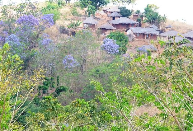 Dor in Malawi mit Jacandara Bäumen