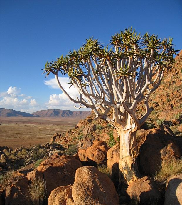 Sommerurlaub in Namibia mit Genuss Touren