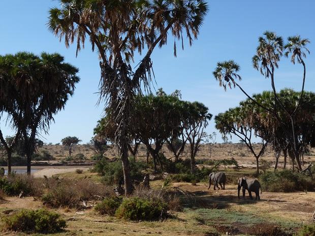 Douma Palmen und Elefanten