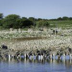 Safari im November und Dezember in Afrika