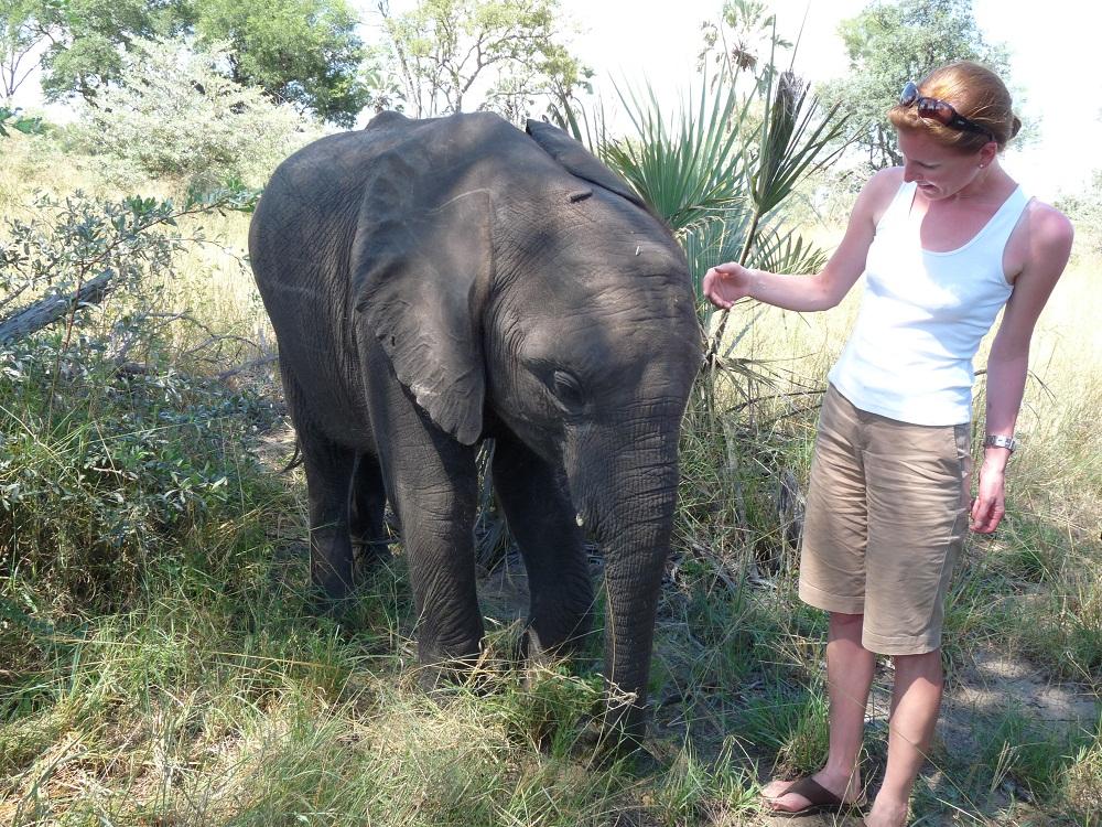 Elefantenbaby im Abu Camp