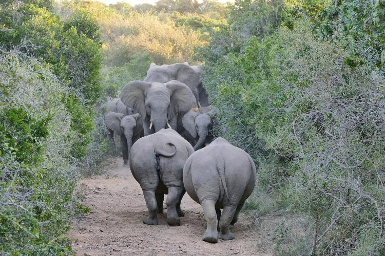 Big Five - Nashörner und Elefanten