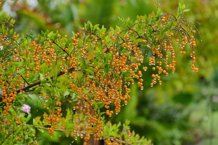 Im Garten von Tsala Treetops