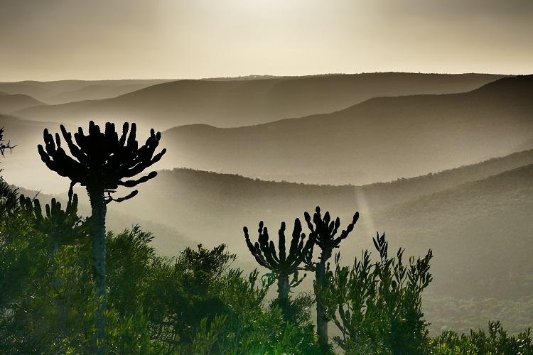 Sonnenuntergang im Kariega Game Reserve
