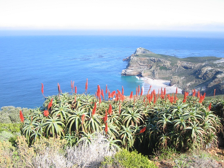 Blüten am Cape of Good Hope