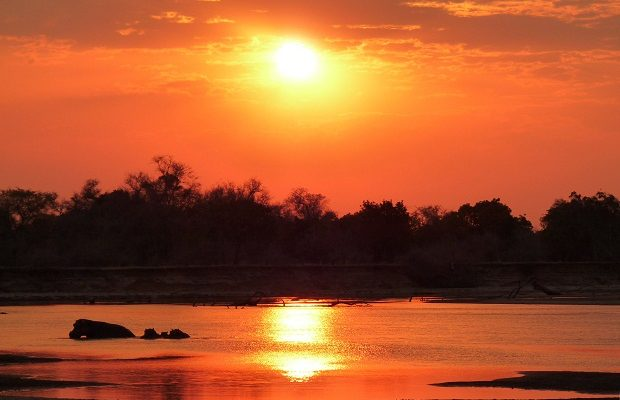 Nilpferde im South Luangwa in Sambia