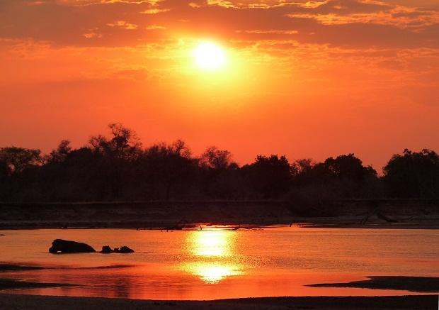 Nilpferde im South Luangwa in Sambia