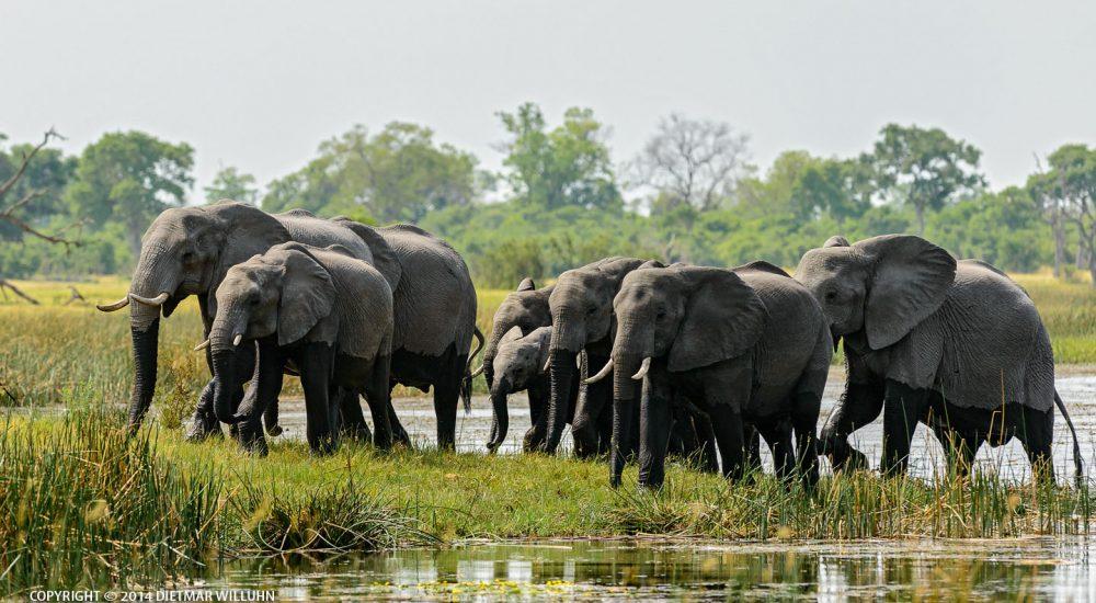 Safariphotography D. Willuhn Elefanten