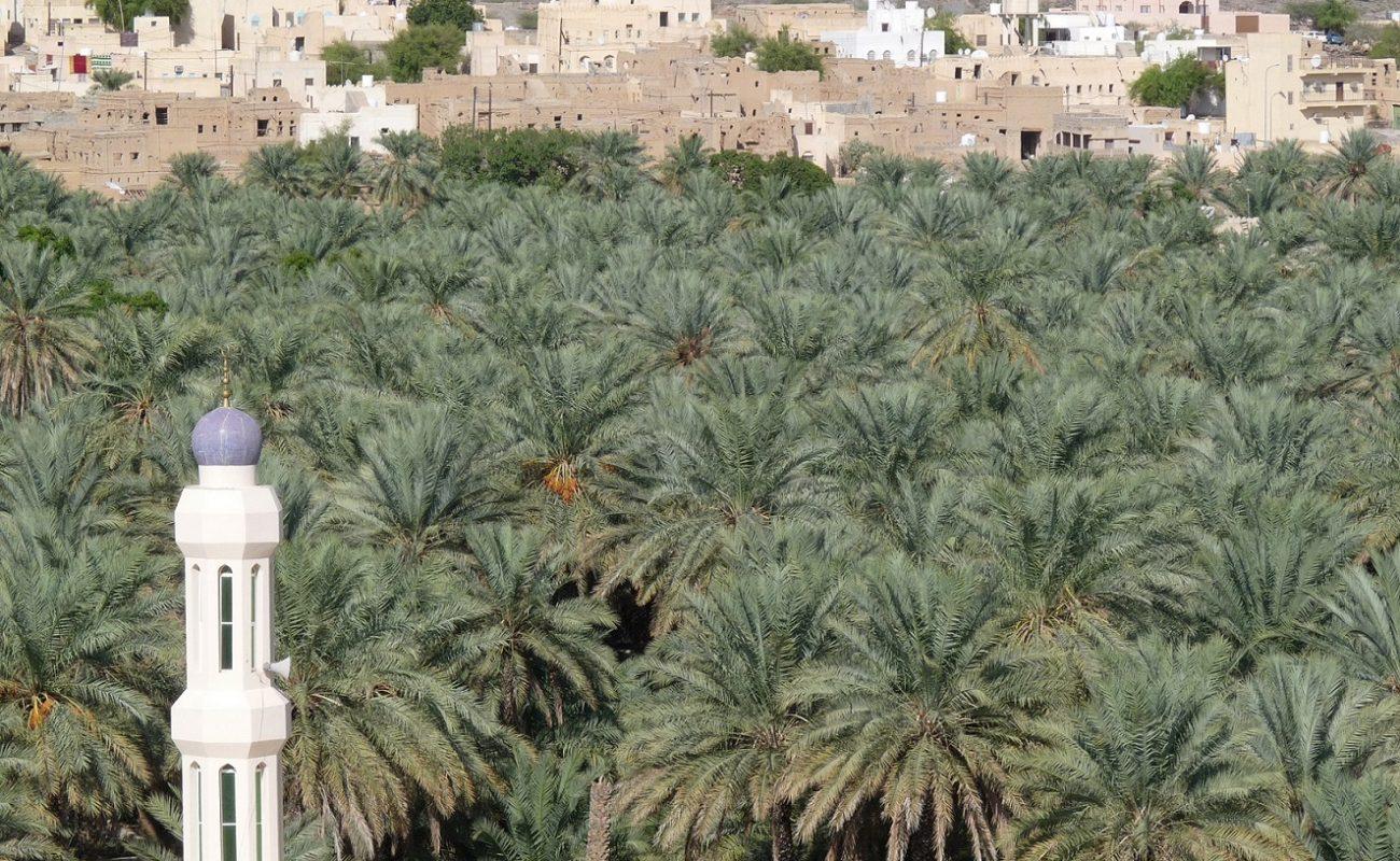 Der Oman hat viele grüne Oasen
