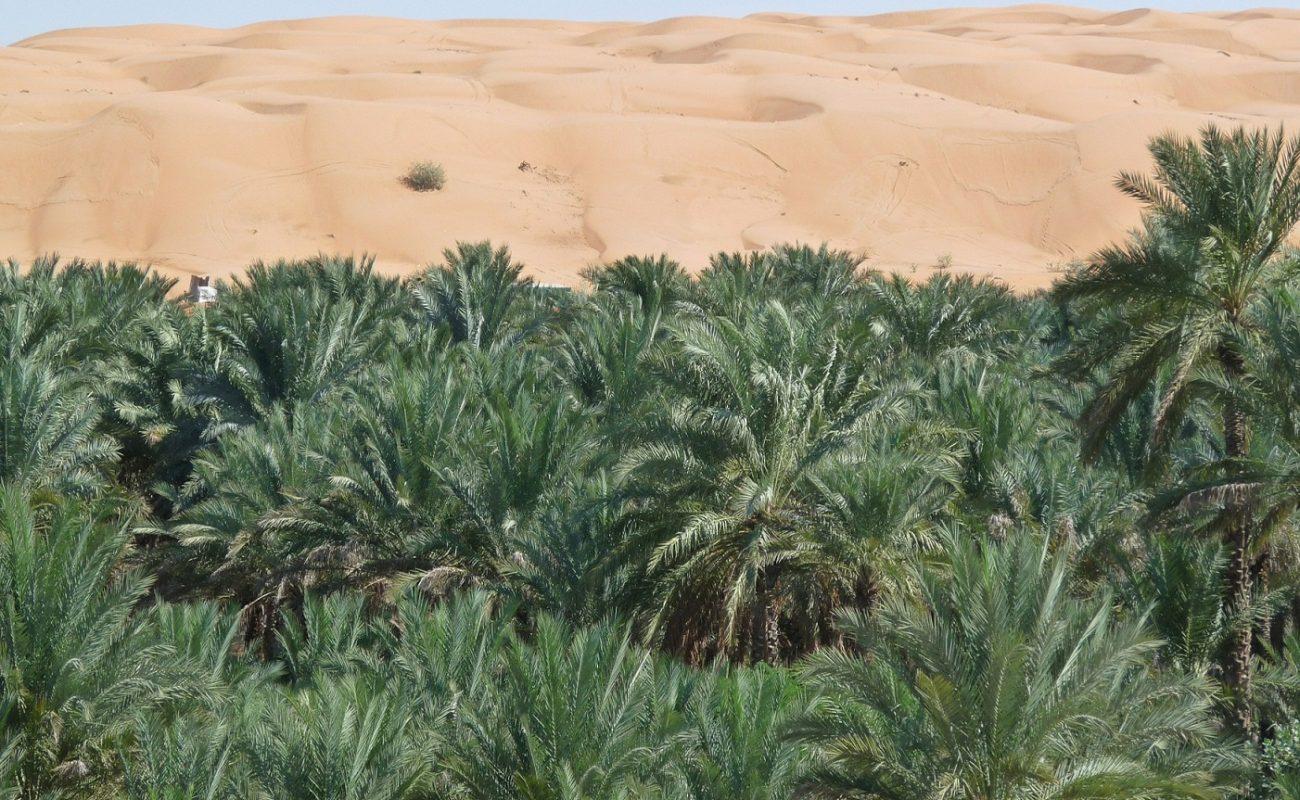 Besuchen Sie einen der Höhepunkte des Omans mit Genuss Touren