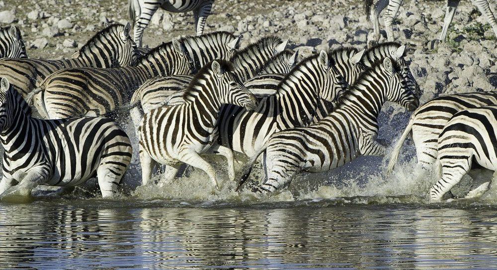 Namibia Safari im Ongava Game Reserve mit Reiseveranstalter Genuss Touren