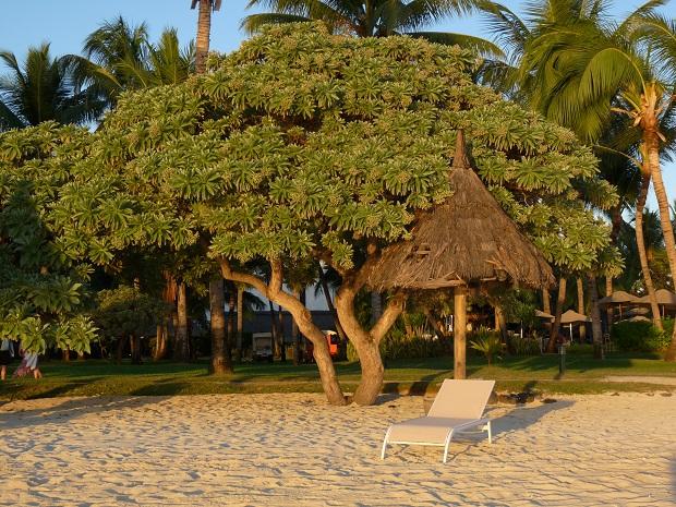 Sommerurlaub im La Pirogue auf Mauritius
