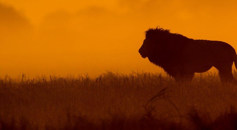 Safari im Kafue in Sambia