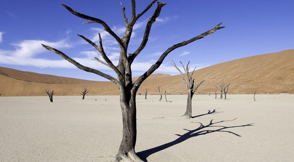 Sossusvlei Dead Vlei Namibia Genuss Touren