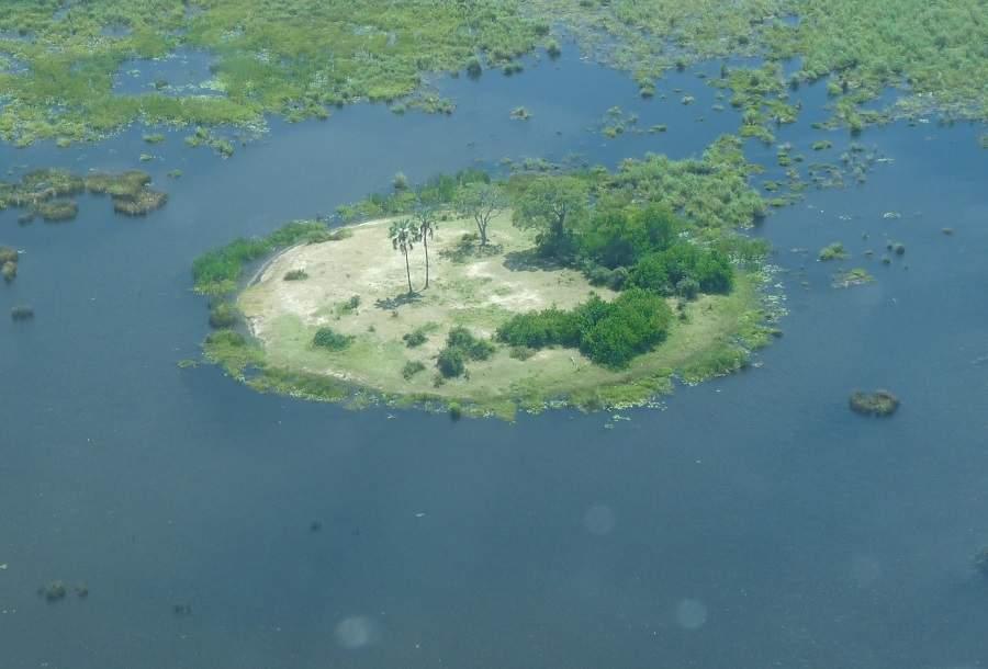 Palmeninsel im Okavango Delta