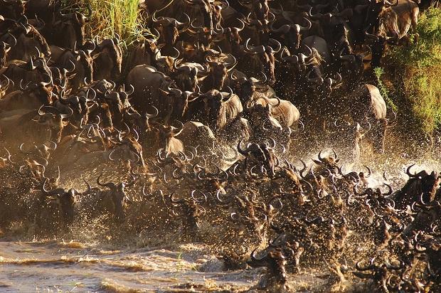 Große Migration zwischen Kenia und Tansania