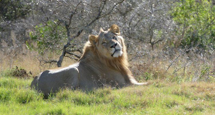 Tagesablauf einer Safari