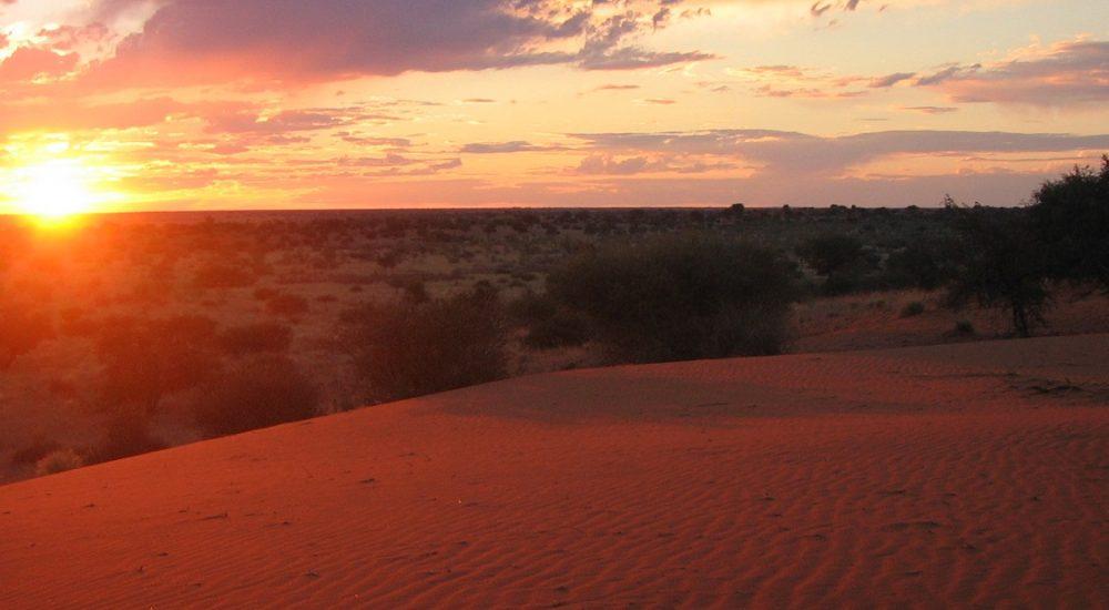 Rote Dünen der Kalahari in Namibia