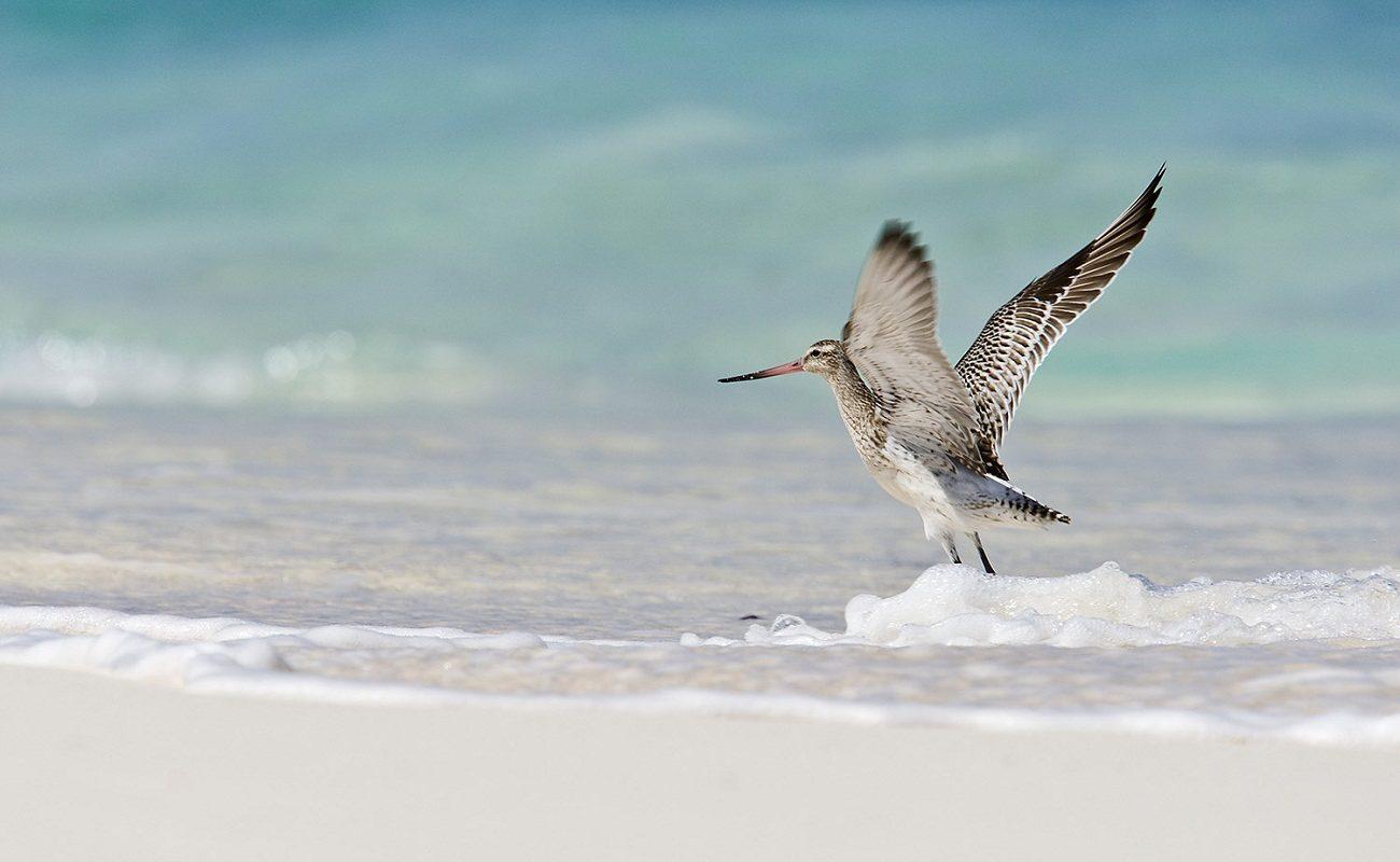 Ein Paradies für Vogelliebhaber