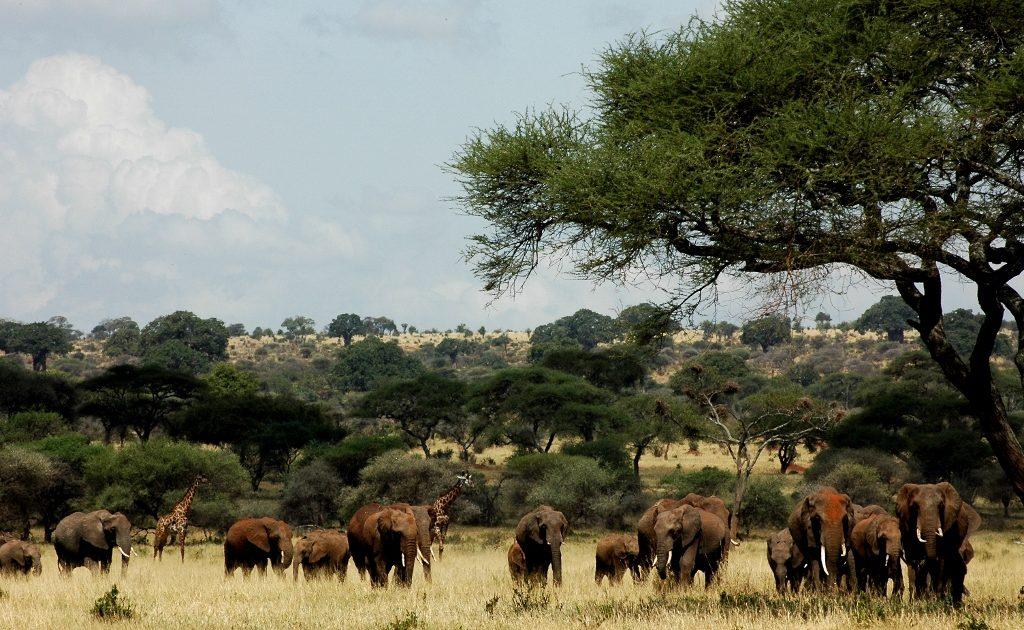 Elefanten auf einer Pirschfahrt in Tansania