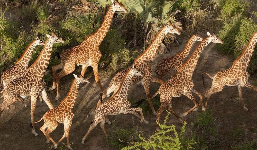 Chem Chem - für eine luxuriöse Slow Safari in Tansania