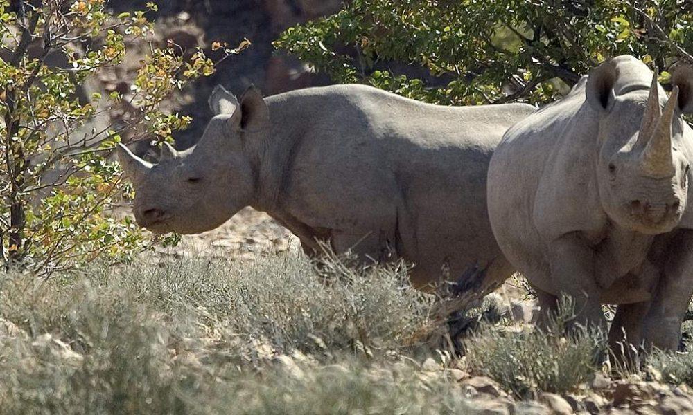 Desert Rhino Camp Namibia