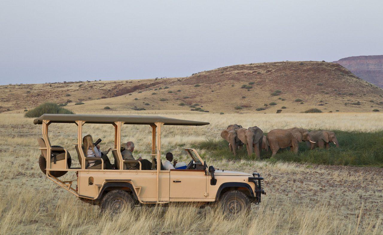 Wüstenelefanten im Damaraland auf einer Pirschfahrt