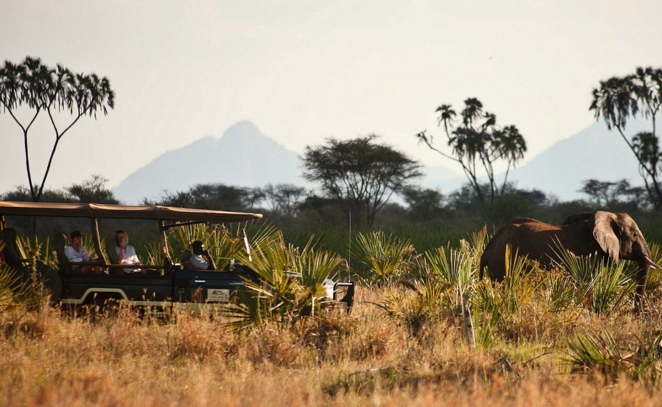 Elefanten auf einer Pirschfahrt im Meru