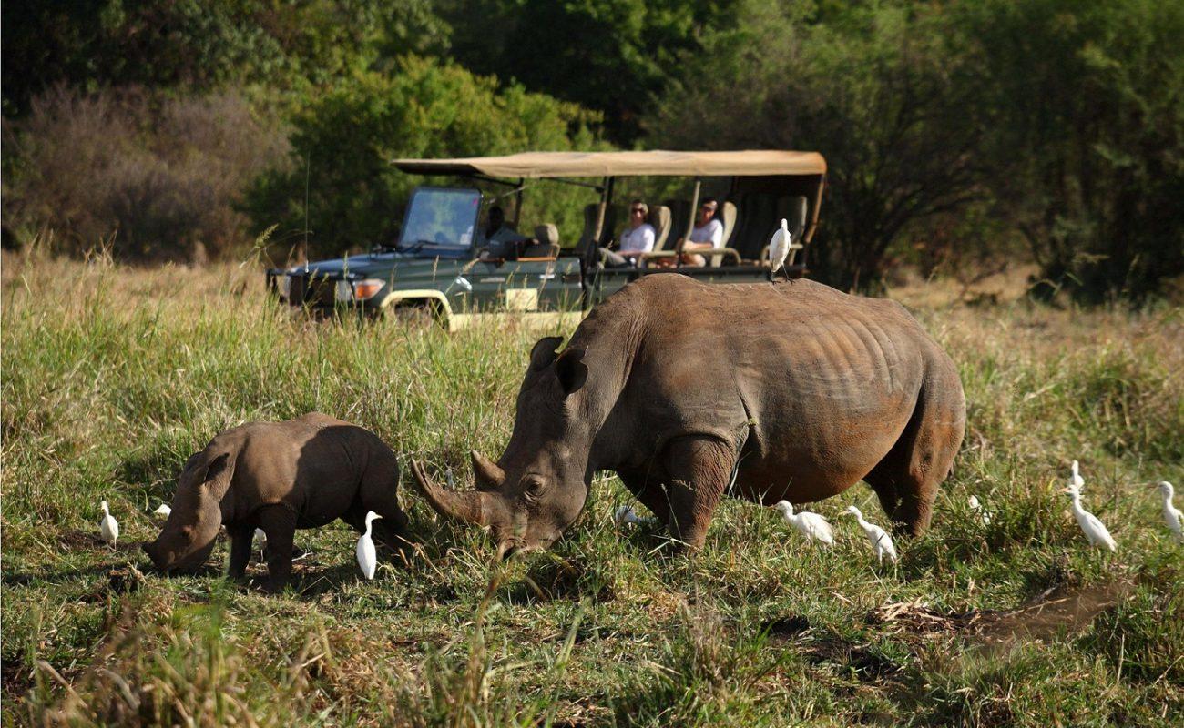 Auch die in Kenia so seltenen Nashörner können Sie hier sehen