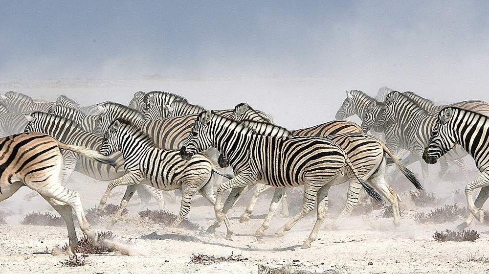 Exklusive Safaris im Etosha Nationalpark