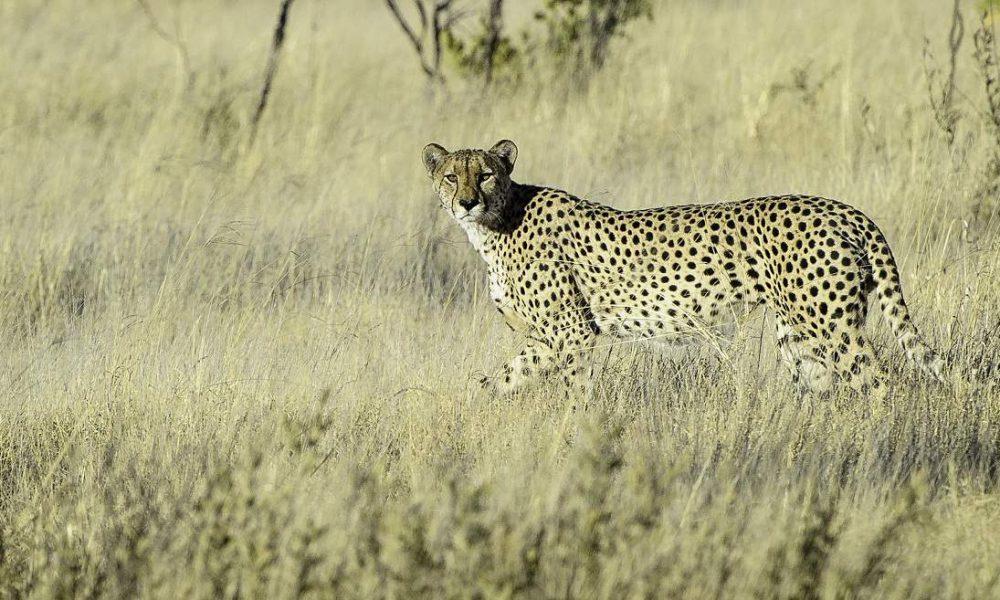 Exklusive Safaris in Kalahari und Makgadikgadi Pans in Botswana