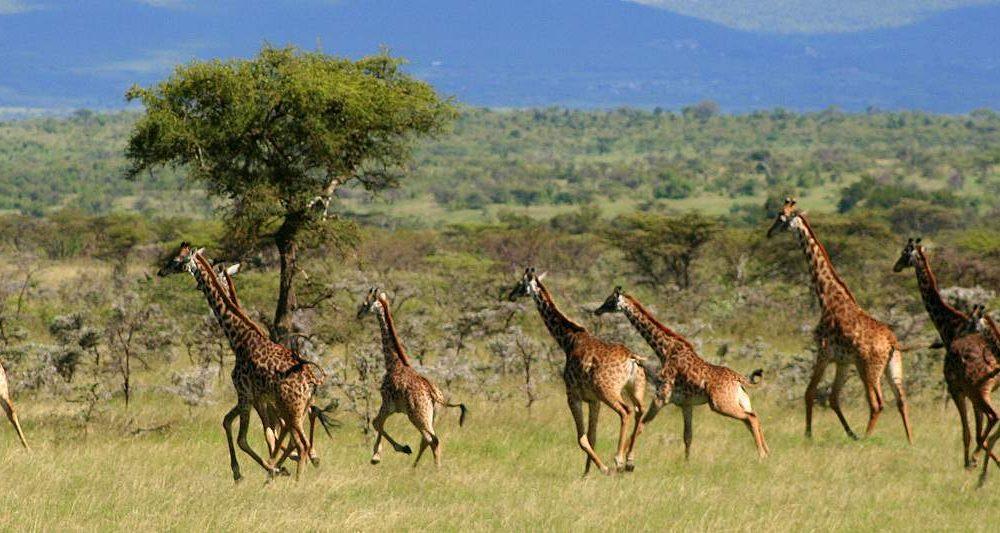 Buchen Sie Kenia mit Safari Spezialist Genuss Touren