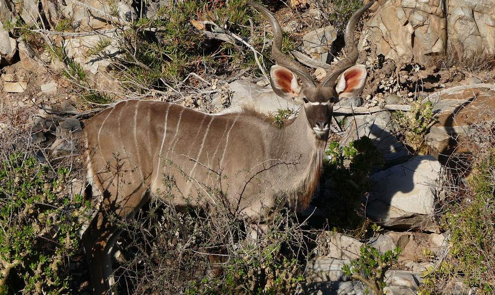 Lerne Sie die KLeine Karoo in Südafrika mit Genuss Touren kennen