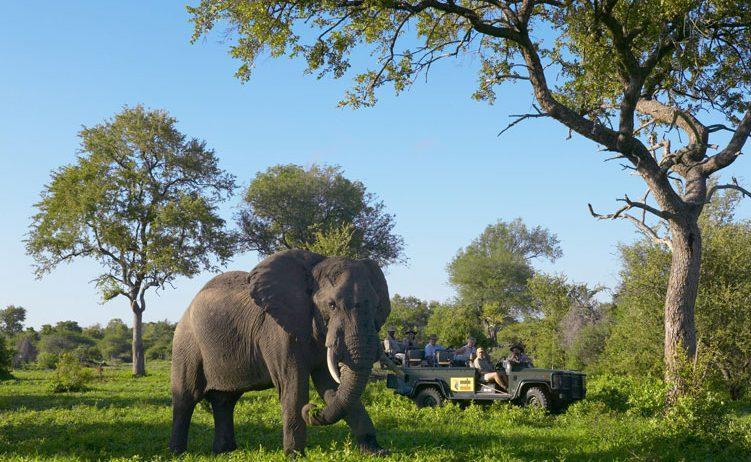 Elefant vor dem offenen Geländewagen im Sabi Sands Gebiet