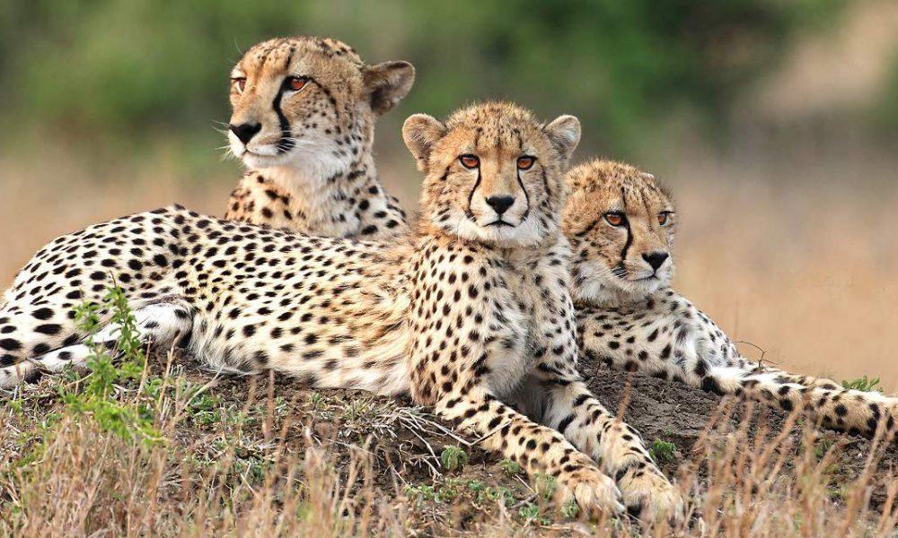 Buchen Sie Ihre Masai Mara Safari mit Genuss Touren