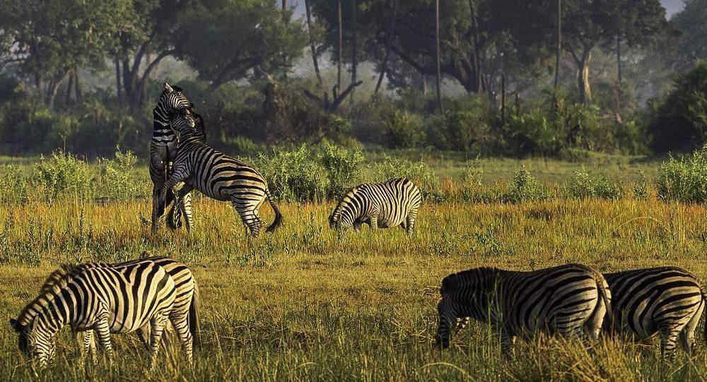 Exklusive Safaris im Moremi Gebiet mit Genuss Touren