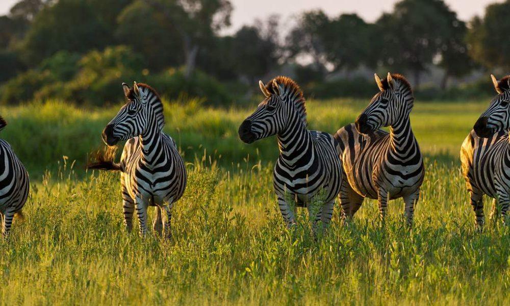 Flugsfaris und Rundreisen in Botswana