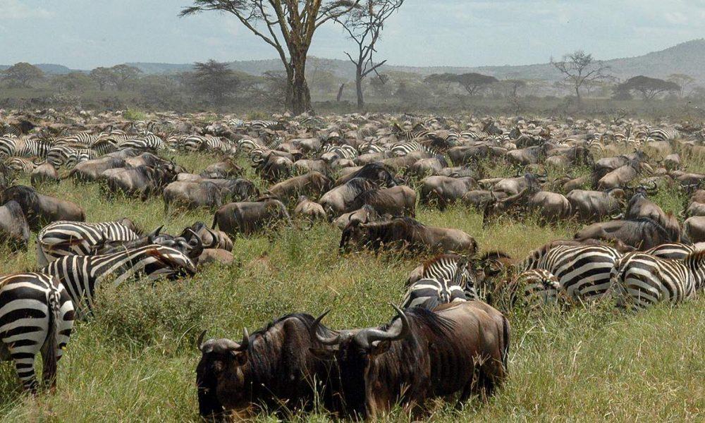Buchen Sie Ihre Kenia Safari und Rundreise mit Afrika Spezialist Genuss Touren