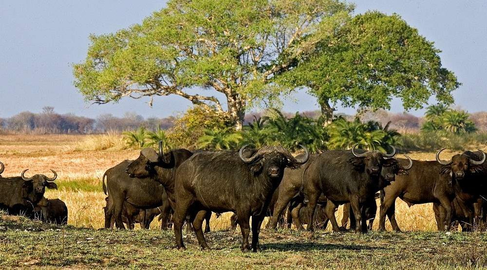 Safaris in Sambia