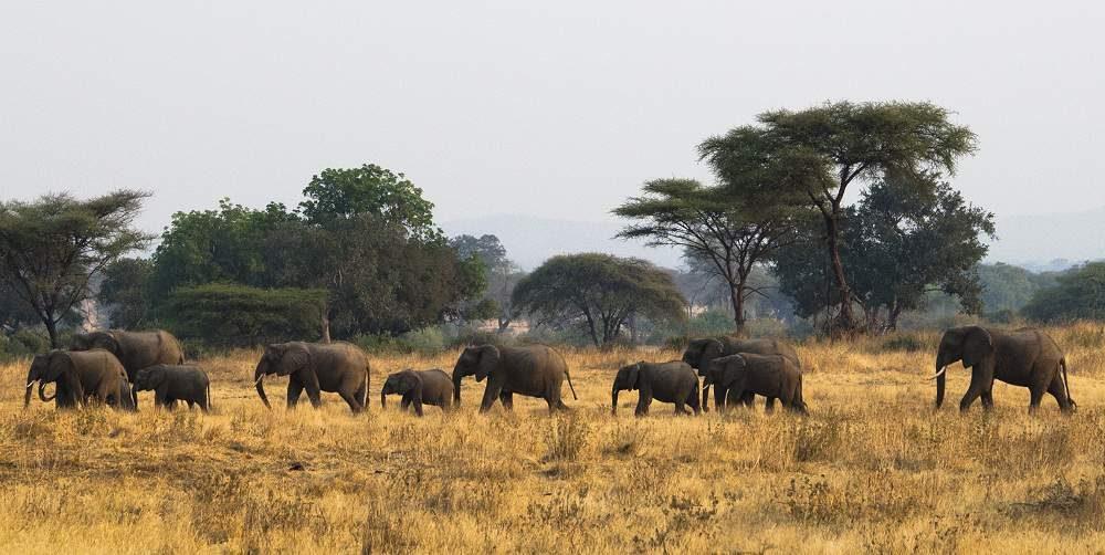 Individuelle Tansania Rundreisen mit Genuss Touren