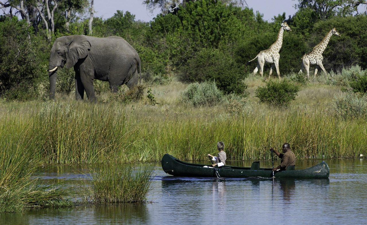 Tierbeobachtung vom Wasser aus am Savute