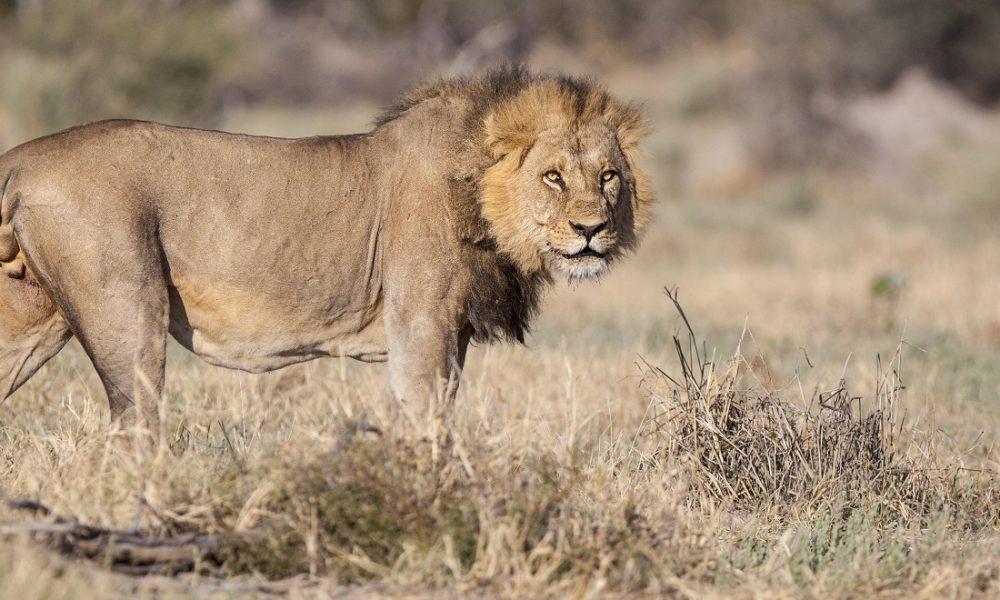 Exklusive Safaris im Savuti Gebiet in Botswana