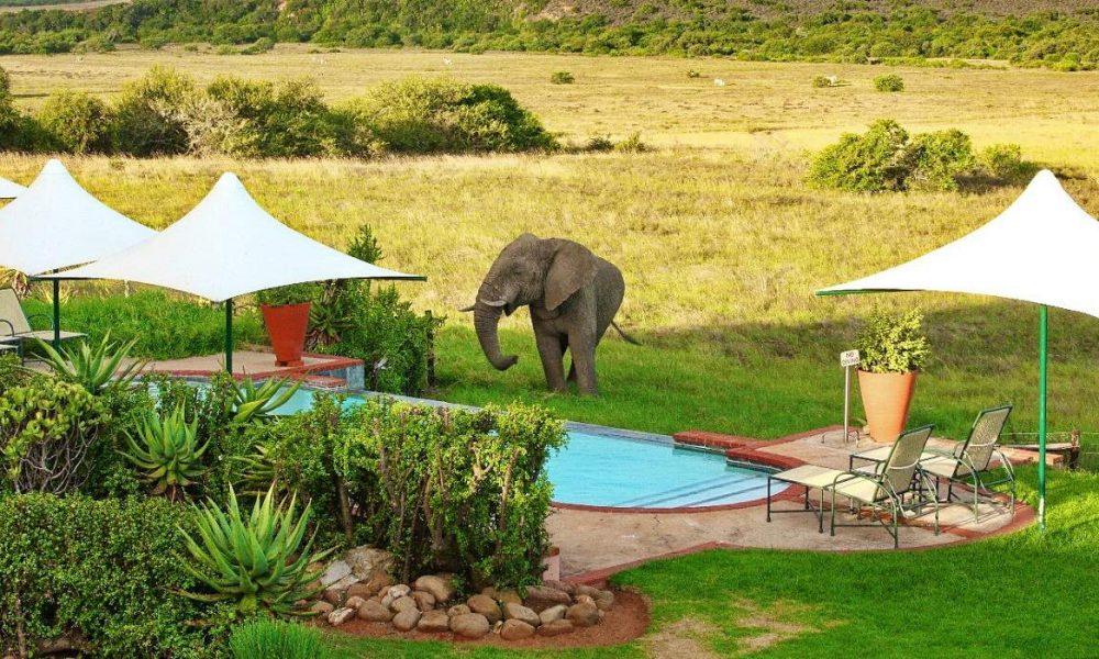 Shamwari Game Reserve Eastern Cape Südafrika