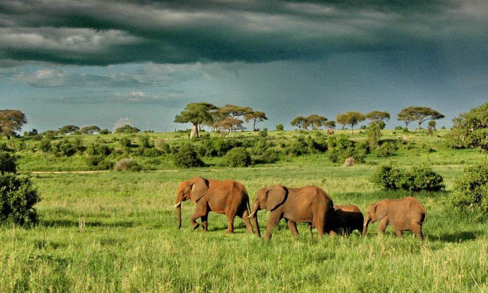 Luxussafari in Tansania mit Genuss Touren, Ihrem Afrika Spezialisten