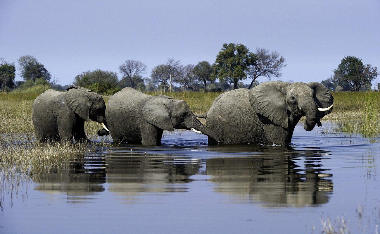 Den Elefanten ganz nah kommen bei einer Pirschfahrt in Botswana